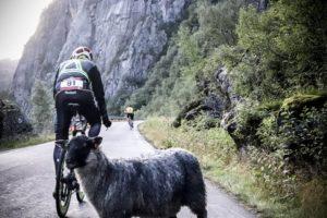 ThorXtri - Schafe auf der Radstrecke